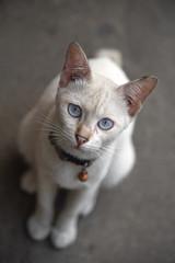 cat  looking  on floor cement