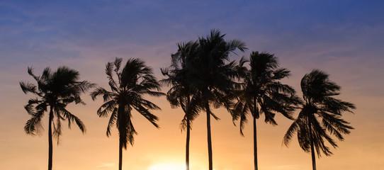 Coconut sky