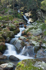Little river and big rocks with moss