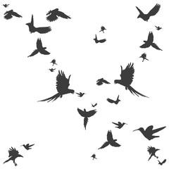Silhouetten von Vögeln