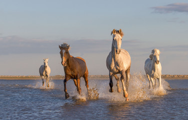 horses running in the water