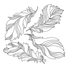 Collection of contour feathers