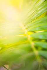 Palm leaves blur light background