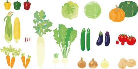 新鮮で美味しそうな野菜たち