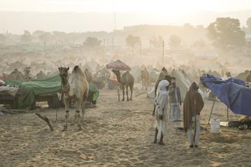 Camel Fair Pushkar 2015