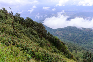 Rainforest at Doi Inthanon National Park in Chiang Mai, Thailand.