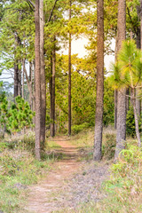 Nature trail for cycling and walking in Phu Kradueng national park in Loei, Thailand.
