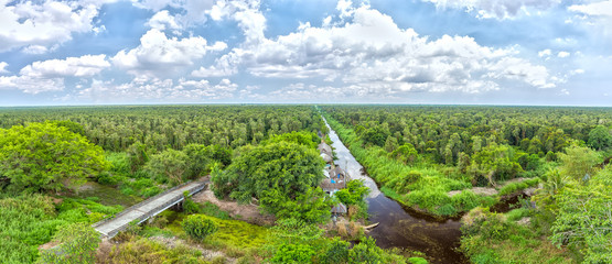 Melaleuca forests in U Minh panorama with hundreds of hectares of mangrove forest cover, is the largest biosphere lungs Vietnam and preserved to this day.