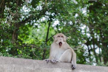 Stock Photo:.Thai monkey in public park, selective focus point