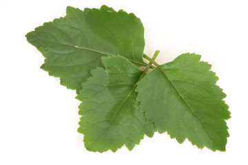Patchouli trees, essential oils and medicinal heat in the lower body.