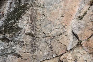 Parete rocciosa infestata da licheni e muschi