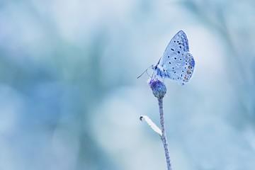 Butterfly on the blue backgroud