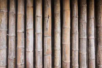 Dry bamboo wall texture background.