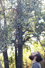 Handsome young Italian man is checking the status of maturity of the olives in the orchard in Tuscany