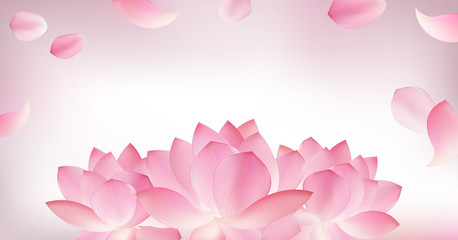Blur pink background with pink petal of lotus