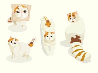 cats. stylized pets set in white.  Cute tabbi van cat