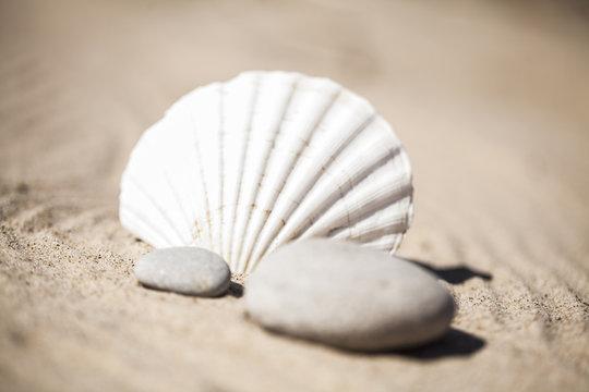 Kamienie i muszle