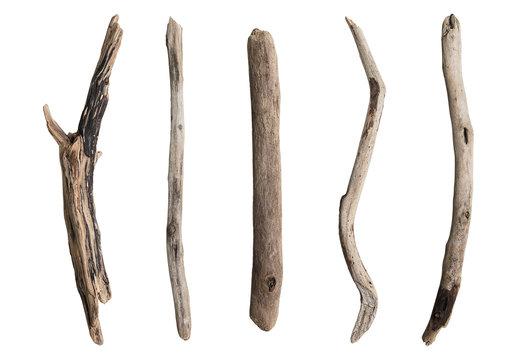 Set of dry tree branch