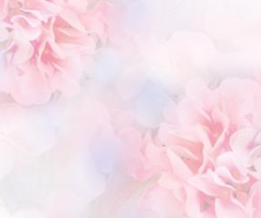 sweet hydrangea flower