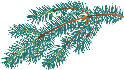 small blue fir branch isolated illustration