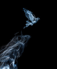dove from light blue smoke isolated on black