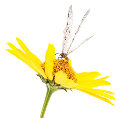 Dragonfly on yellow flower.