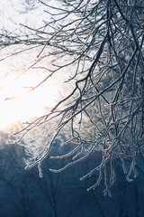 Beautiful tree branches in hoarfrost the winter on a blurred background sun