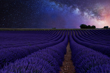 beautiful Milky Way above the lavender fields