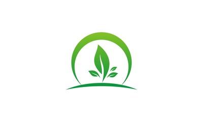 green leaf organic environment logo