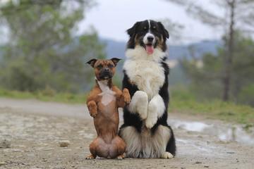 Two dog cute