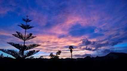 Sunset red clouds palms, fir Sicily italy aci s. Antonio