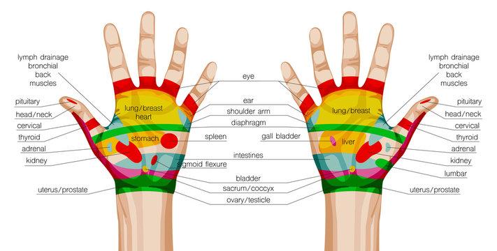 acupuncture hands scheme.