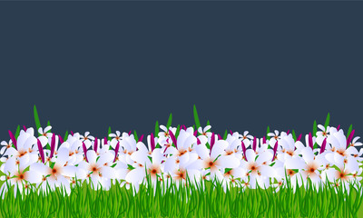 Flowers vector background with green grass