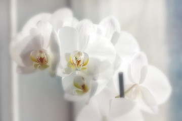 Orchids in daylight