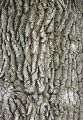 abstract background with tree bark