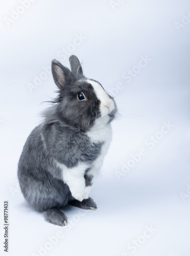Pet Rabbit Standing On Hind Legs Stock Photo And Royalty Free