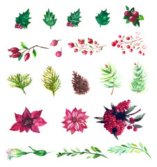 Set of winter watercolor plants, flowers and berries