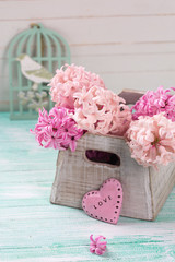 Background with fresh pink  hyacinths in box and decorative pink