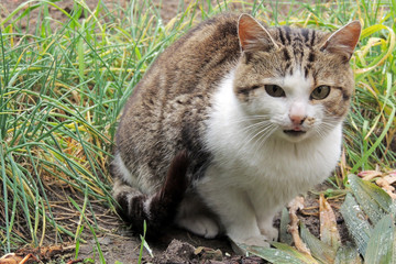 Cat. Pet. Street