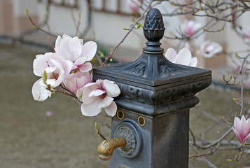 PRAGUE, CZECH REPUBLIC - APRIL 16, 2010: Old water crane with blooming magnolia tree