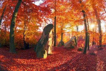 Golden colors of autumn