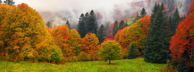 Misty autumn Transcarpathia