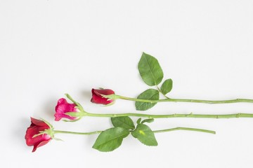 Beautiful roses as a symbol of love on Valentine's Day and every other day.