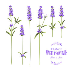 Set of lavender.