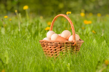 Basket with fresh chicken eggs on a green meadow