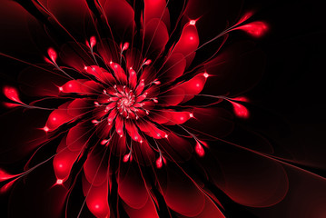 Abstract fractal flower,red on a black background