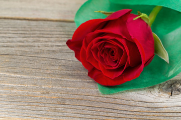 Happy Valentines day with single freshly cut red rose on wood