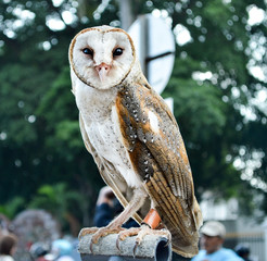 6 months old baby owl