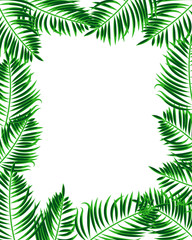 Tropical frame. Palm leaf background with place for your text.