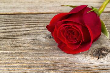 Single freshly cut red rose on rustic wood